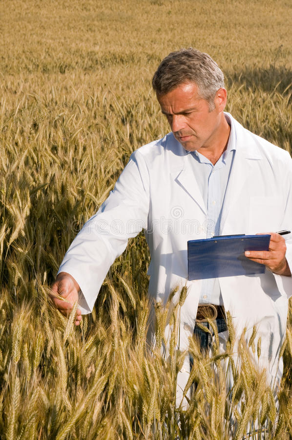 Technician in a wheat field stock photography
