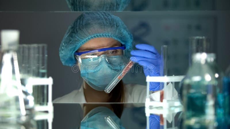 Technicien de laboratoire ?tudiant l'?chantillon de viande dans le tube ? essai, organisme g?n?tiquement modifi? images libres de droits