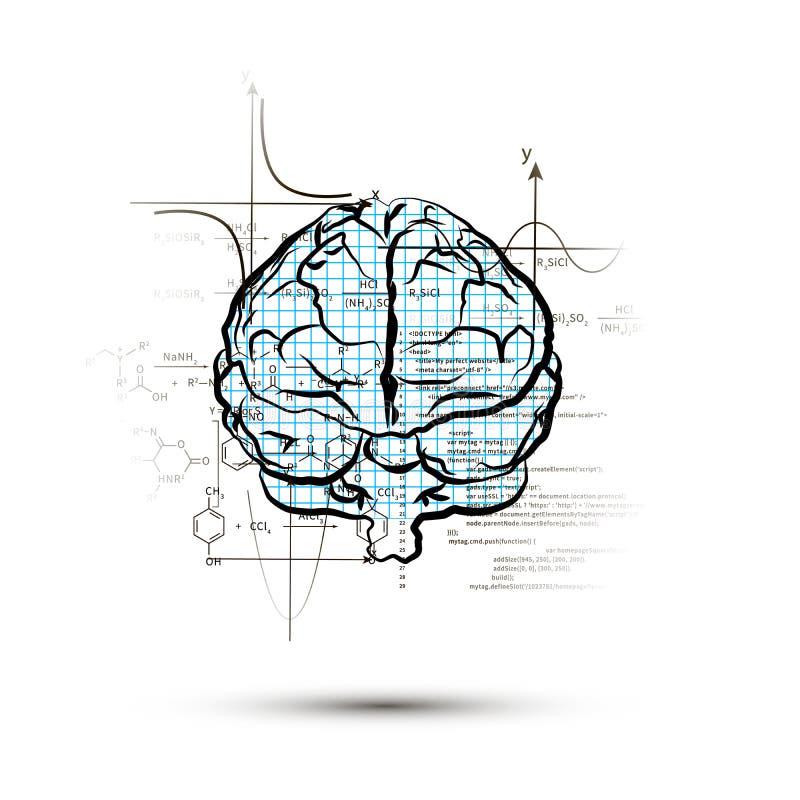 Techniczna hemisfera ludzki mózg w frontowym widoku, prawa strona mózg funkcjonuje pojęcie odizolowywający na bielu ilustracji