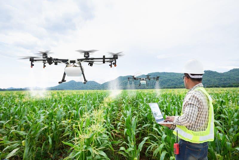 Technikerlandwirtgebrauch wifi Rechnersteuerungs-Landwirtschaftsbrummen auf Zuckermaisfeld stockbild