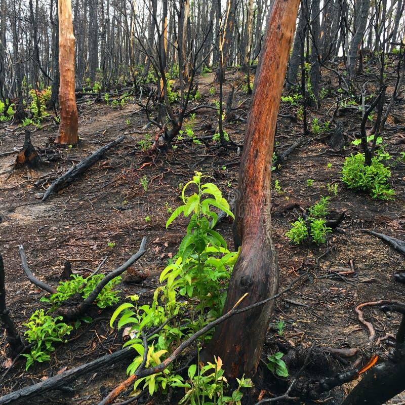 Tecken av en löpeld och en återväxt i skogen royaltyfria bilder