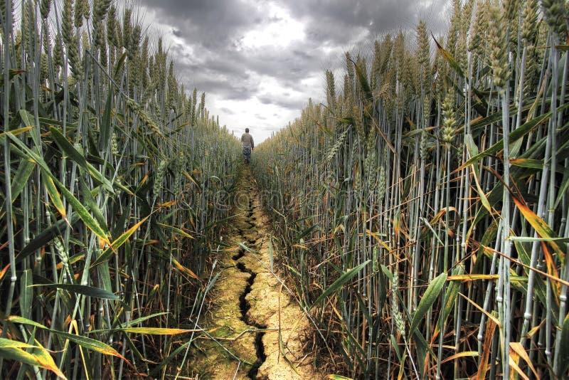 Tecken av torkan arkivfoton