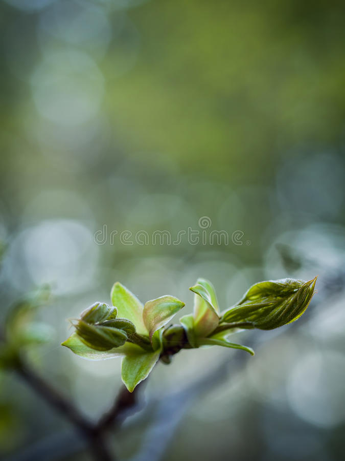 Tecken av våren arkivfoto