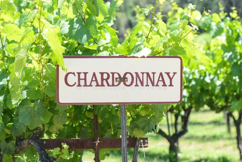Tecken för Chardonnay druvor arkivbild
