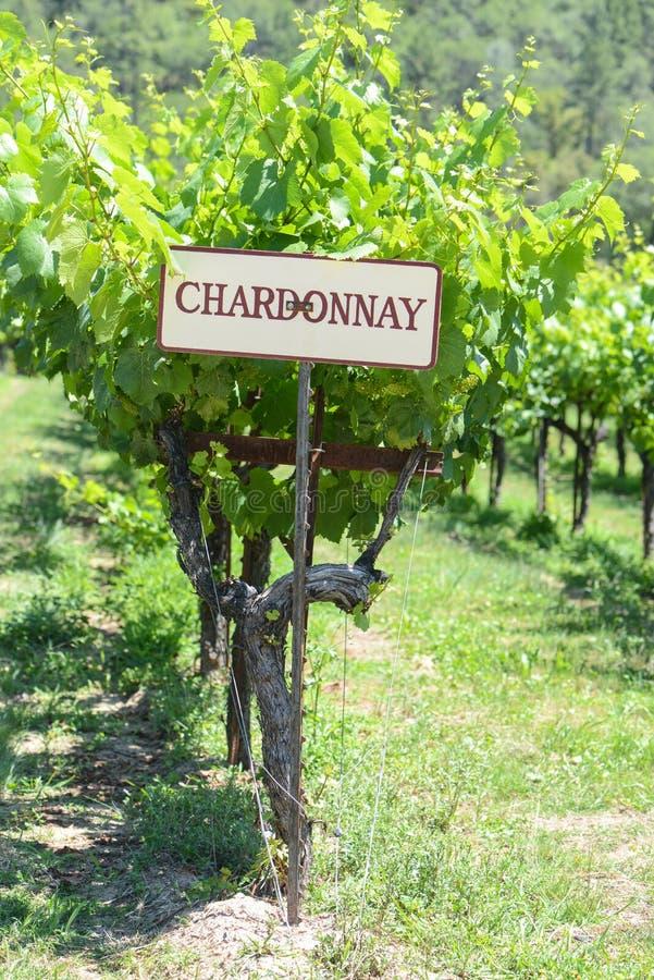 Tecken för Chardonnay druvor royaltyfri foto