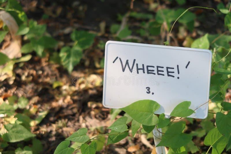 Tecken för grön växt för trädgård Wheee ett slags murgröna i botanisk trädgård Roligt positivt optimistiskt inskriftfoto royaltyfria foton