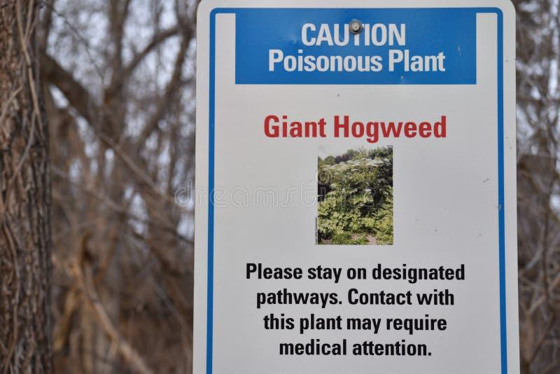 Tecken för varning jätteHogweed för giftig växt fotografering för bildbyråer