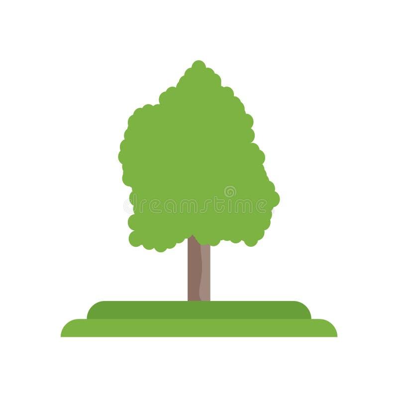 Tecken och symbol för vektor för symbol för träd för vit aska som isoleras på vit bac vektor illustrationer