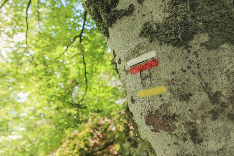 Tecken på en stam arkivbilder