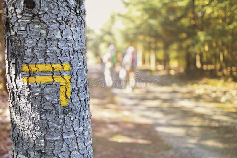 Tecken på trädet royaltyfri bild