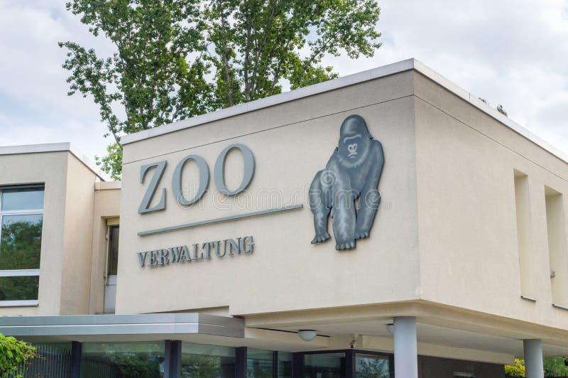 Teckenzoo och gorilla på den Berlin zoo royaltyfri foto