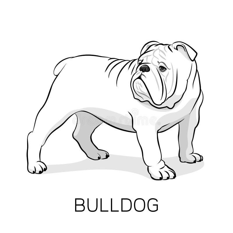 Tecknad filmengelskabulldogg hunden eps formaterar illustrationjpg royaltyfri illustrationer