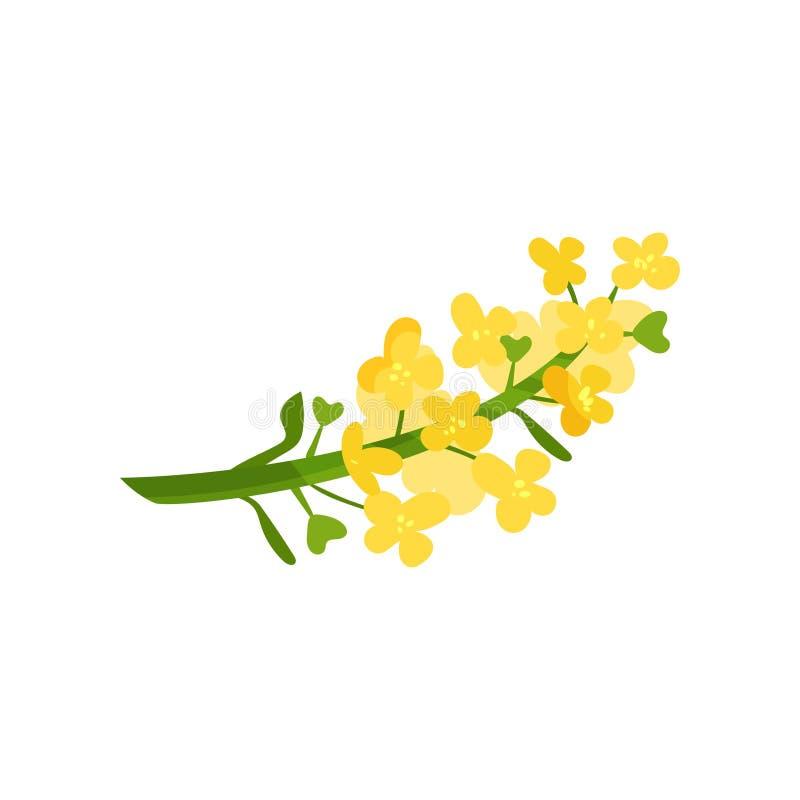 Tecknad filmillustration av små gula blommor på grön stjälk Lös blommande ört Blom- eller botaniskt tema Plan vektor royaltyfri illustrationer