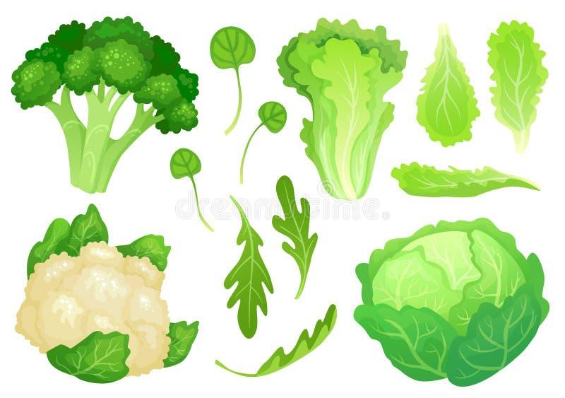 Tecknad filmkålar Nya grönsallatsidor, vegetarian bantar sallad och grön kål för sund trädgård Blomkålhuvudvektor royaltyfri illustrationer