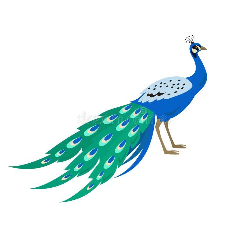 Tecknad filmpåfågelsymbol på vit bakgrund royaltyfri illustrationer