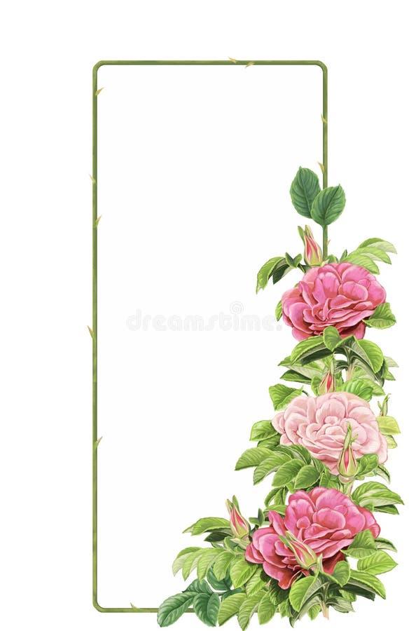 Tecknad filmplats med härliga och färgrika blommor på vit bakgrund vektor illustrationer