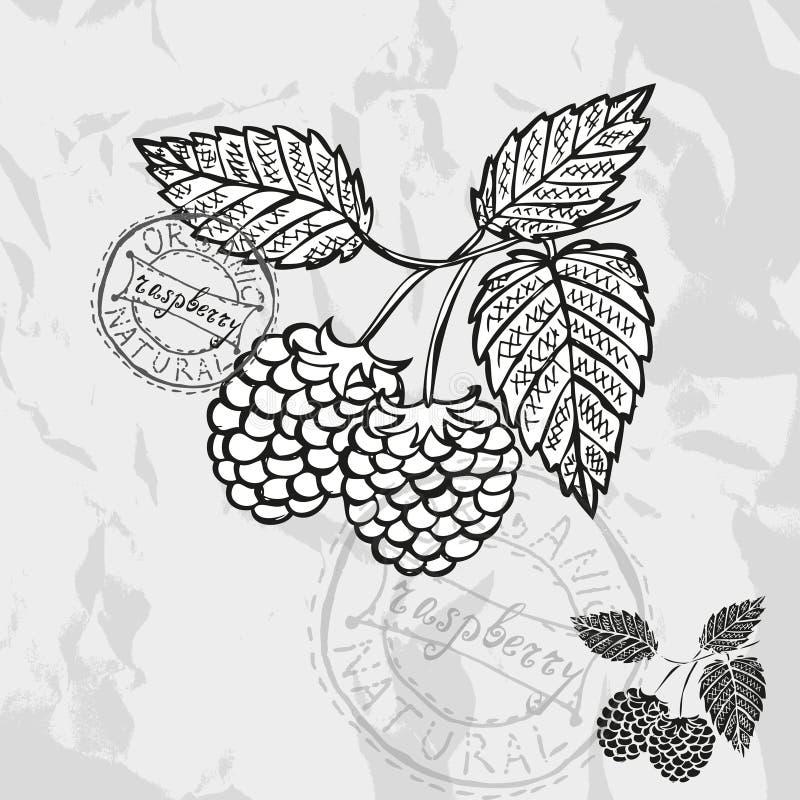 tecknad frukthand royaltyfri illustrationer