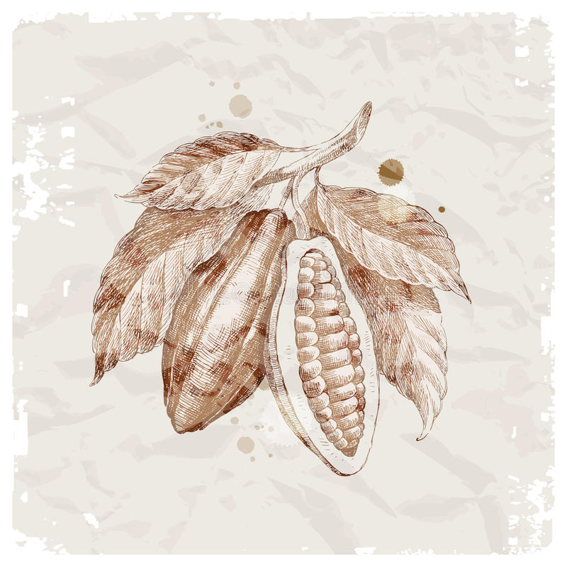 tecknad hand för bönafilial kakao stock illustrationer