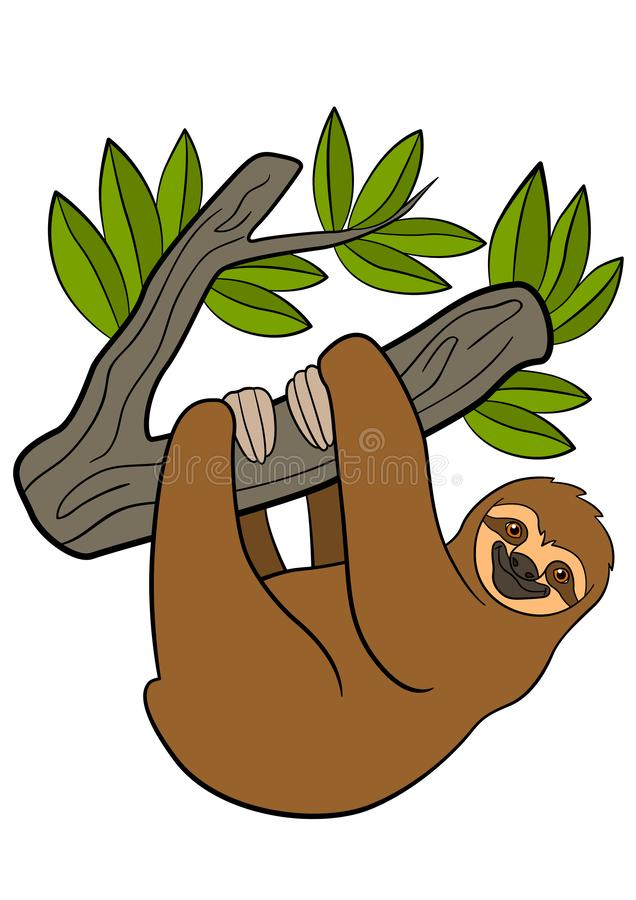 tecknad hand isolerad vektorwhite för djur tecknad film Gulliga lata sengångarehängningar på trädet vektor illustrationer