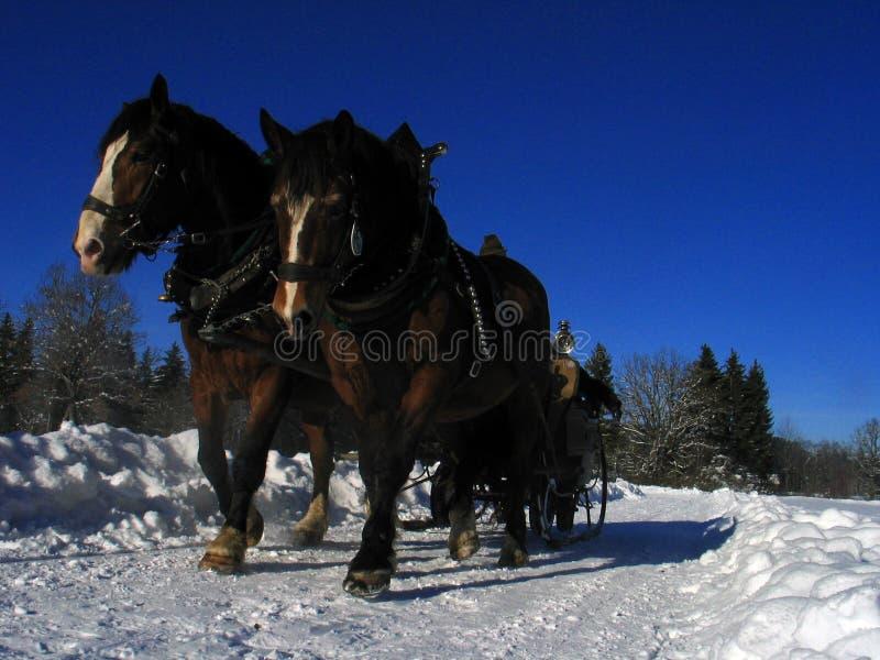 tecknad vinter för hästliggandesleigh arkivfoto