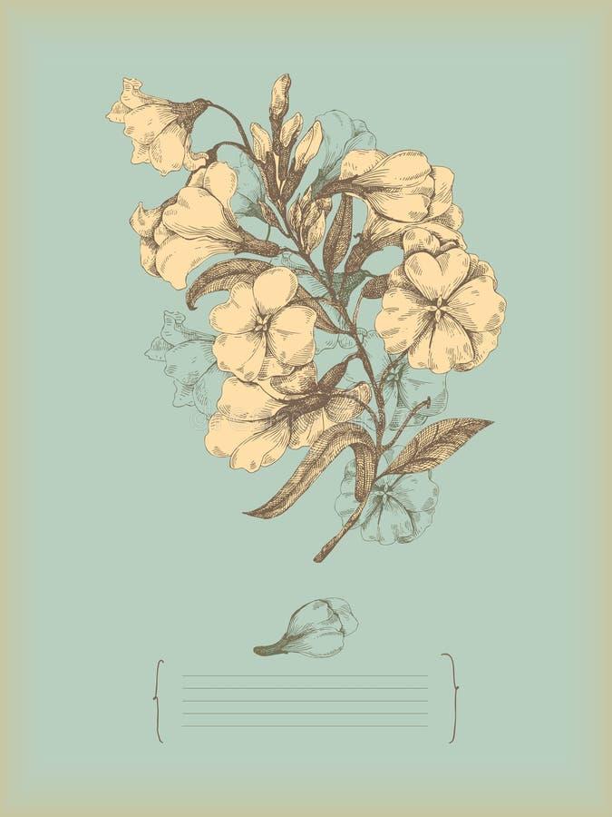 tecknande blomma stock illustrationer