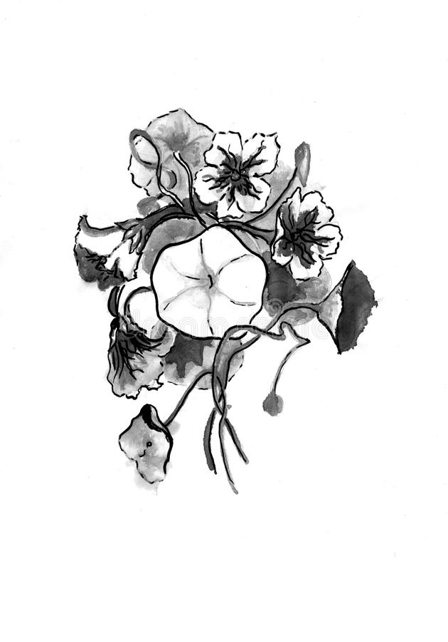Teckning av indiankrasseblommor royaltyfri bild