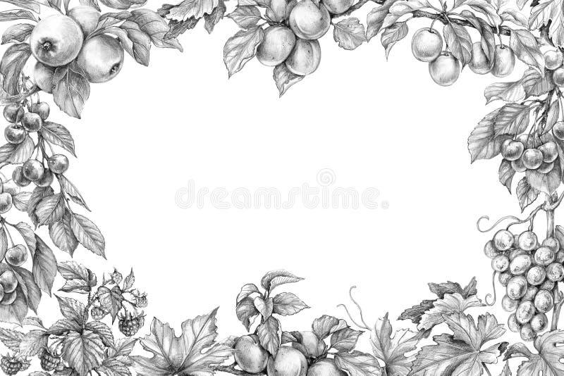 Teckning för frukthorisontalramblyertspenna stock illustrationer