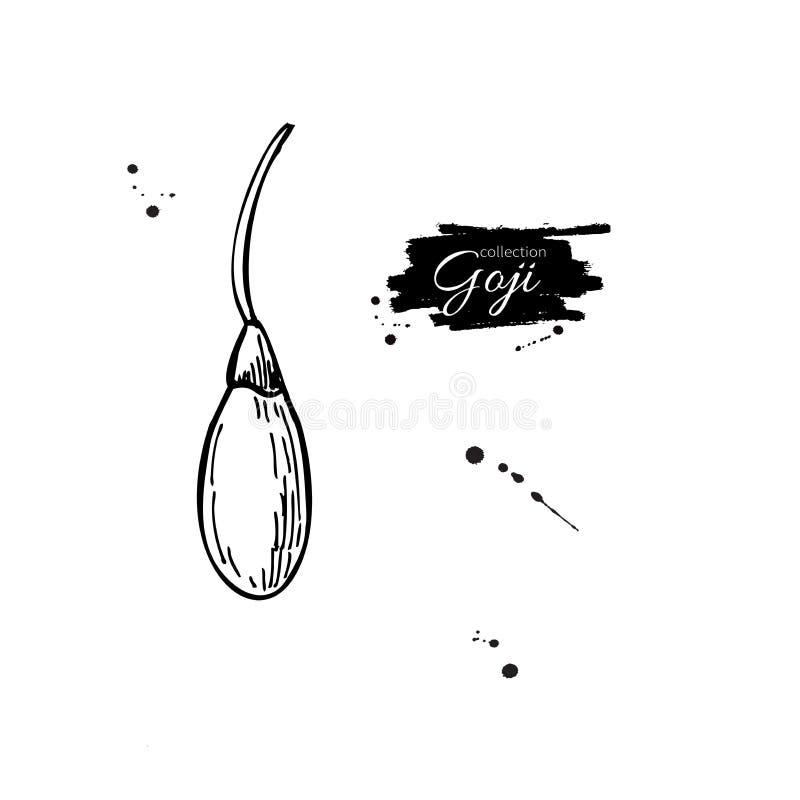 Teckning för Goji bärsuperfood Dragen isolerad hand stock illustrationer