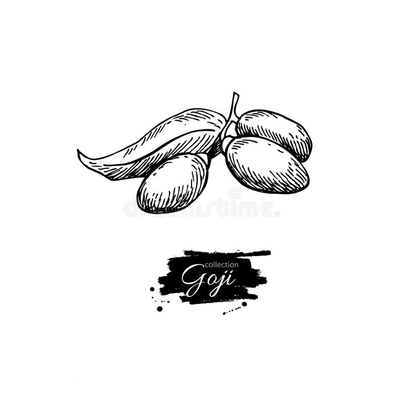 Teckning för Goji bärsuperfood Isolerad hand dragen illust royaltyfri illustrationer