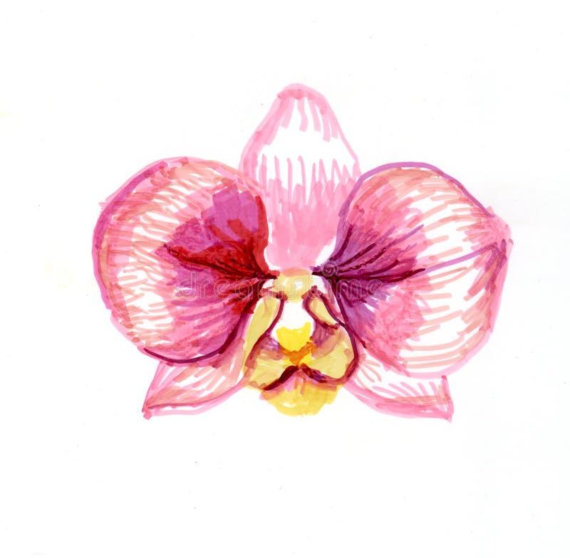 Teckning för orkidéblommavattenfärg stock illustrationer