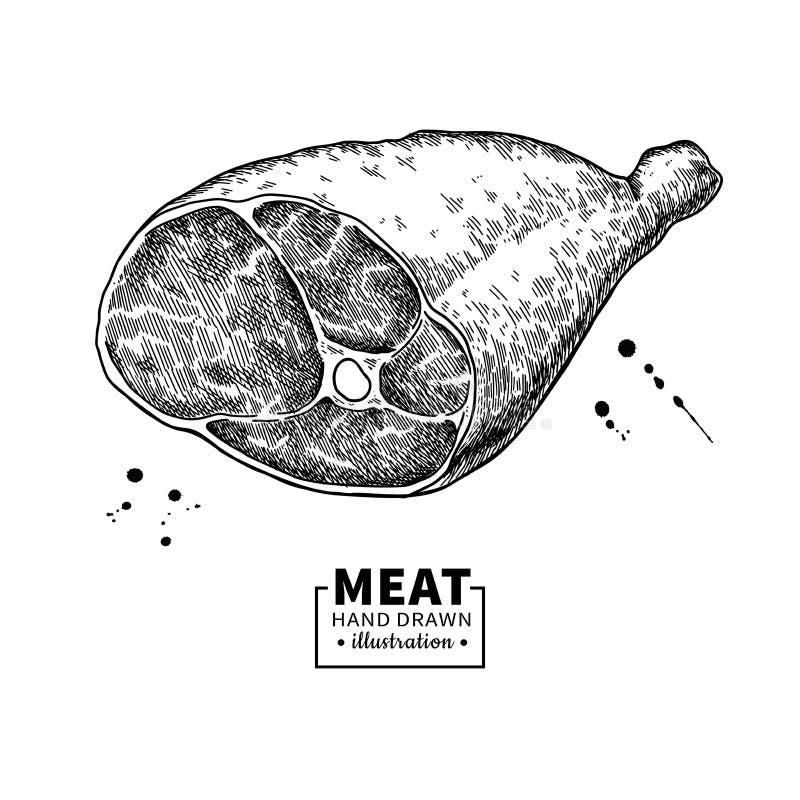 Teckning för vektor för Parma skinka Hand dragen hamonköttillustration italiensk prosciutto royaltyfri illustrationer