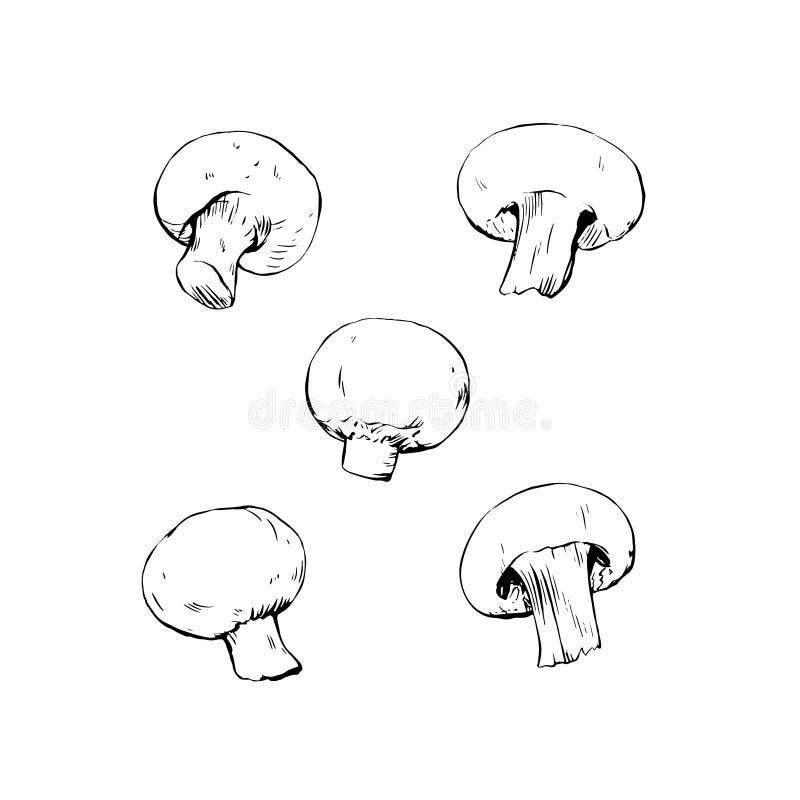 Teckningen för Champignonchampinjonfärgpulver isolerade vektor illustrationer