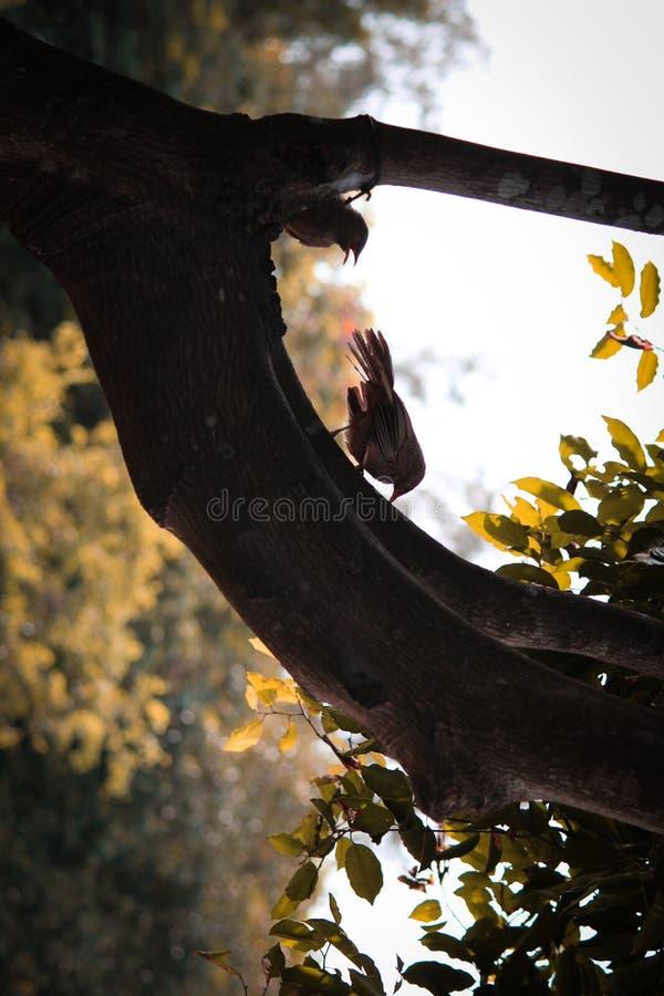 Tecleo de la mañana fotografía de archivo
