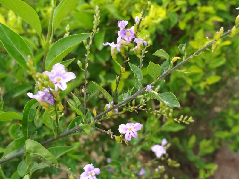 Tecleo de las flores foto de archivo