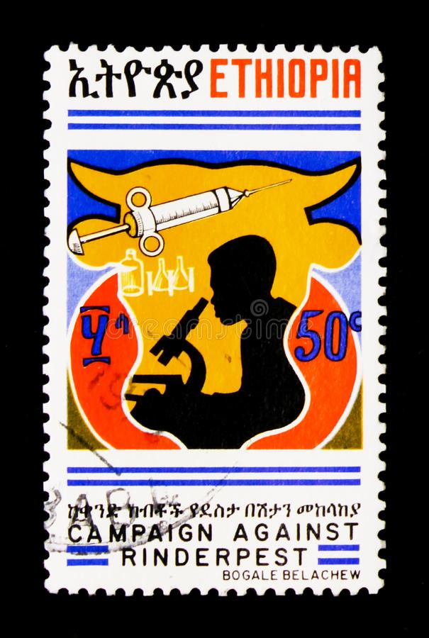 Tecnico di laboratorio, campagna contro il serie di peste bovina, c fotografia stock libera da diritti