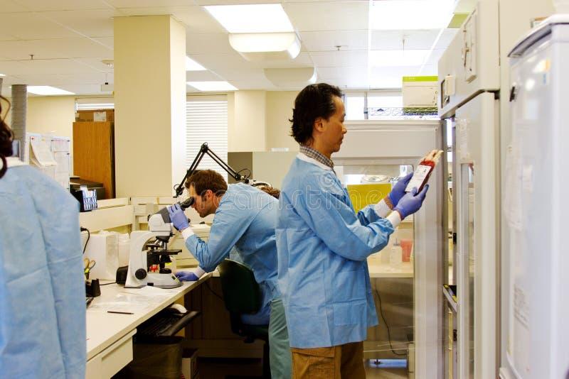 Tecnico di laboratorio che controlla sangue fotografie stock libere da diritti