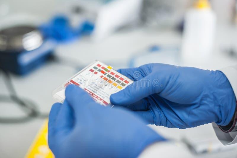 Tecnico di laboratorio che lavora con la carta reagente delle strisce test fotografia stock