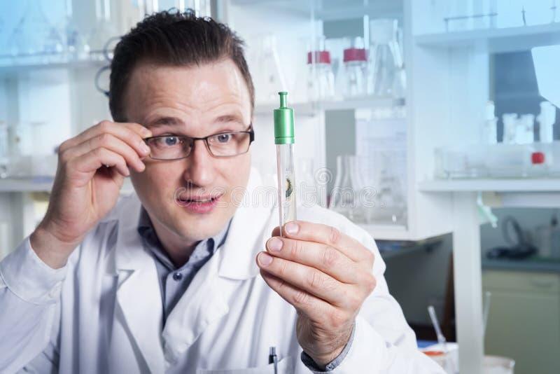 Tecnico di laboratorio osservando la provetta con la muffa al laboratorio immagine stock