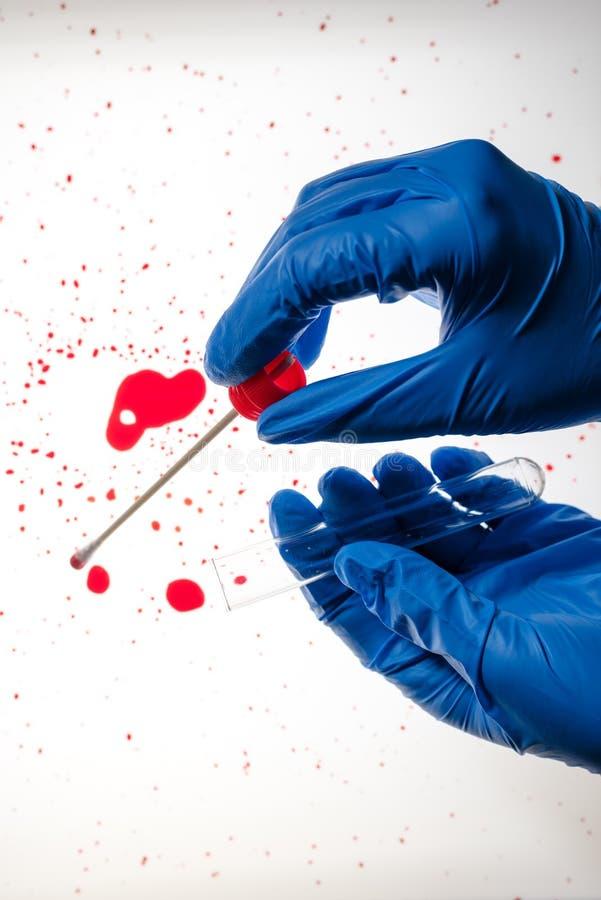 Tecnico legale che preleva il campione del DNA dalla macchia di sangue immagine stock