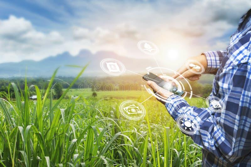 Tecnología de la innovación para el sistema de granja elegante, gestión de la agricultura, smartphone de la tenencia de la mano c imagenes de archivo