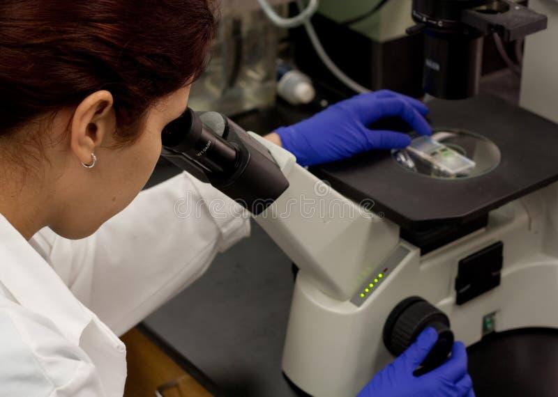 Tecnologia del laboratorio che funziona con il microscopio fotografia stock