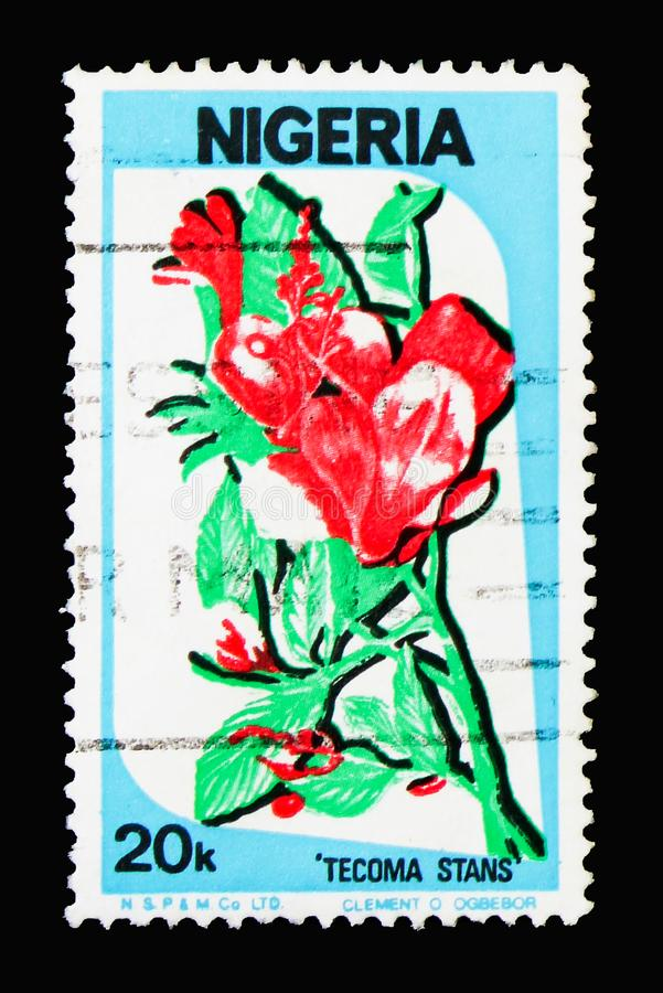 Tecoma stans, Culture, nature and economy serie, circa 1986. MOSCOW, RUSSIA - MARCH 18, 2018: A stamp printed in Nigeria shows Tecoma stans, Culture, nature and stock image