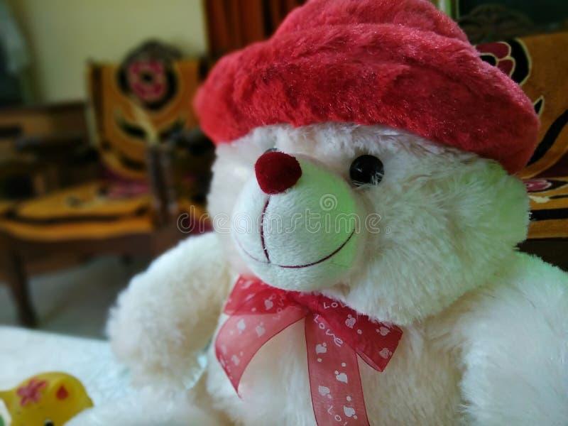 teddy fotografia stock libera da diritti
