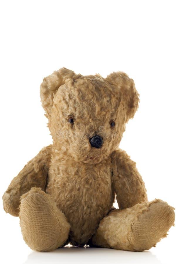 teddy fotografia royalty free