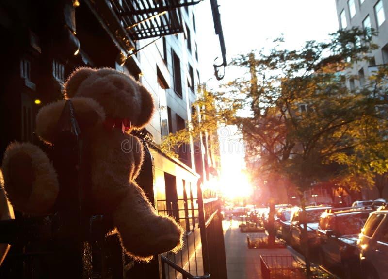 teddy lizenzfreies stockfoto