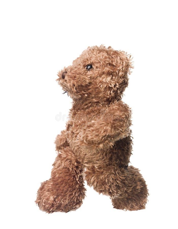 Download Teddy bear stock image. Image of shot, bear, full, studio - 11414569