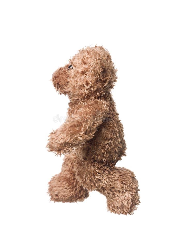 Free Teddy Bear Stock Photography - 11414592