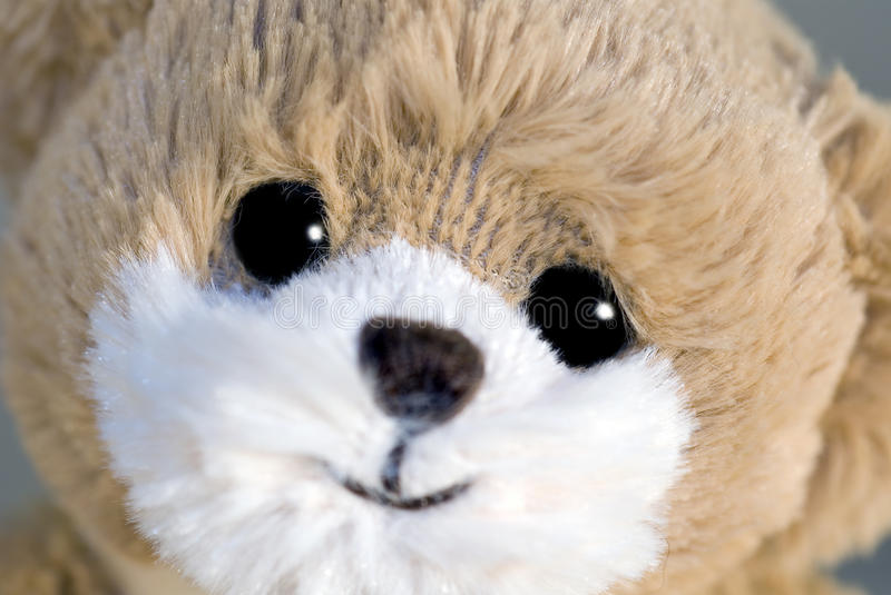 Download Teddy bear stock image. Image of fluffy, teddie, cute - 24755719