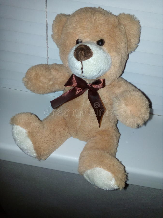 Teddy Bear stockfoto