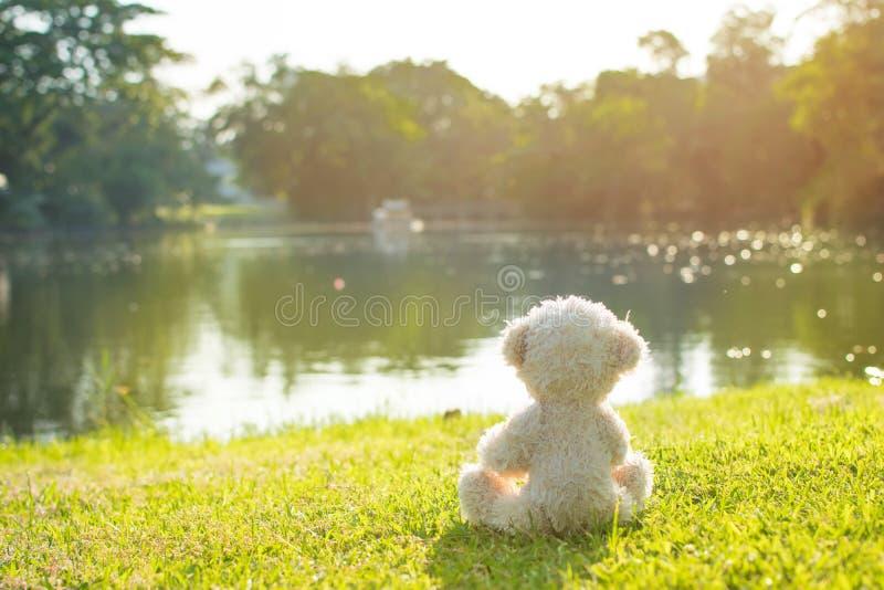 Teddy Bear lizenzfreie stockbilder
